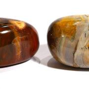 Fossilised Wood Pebble