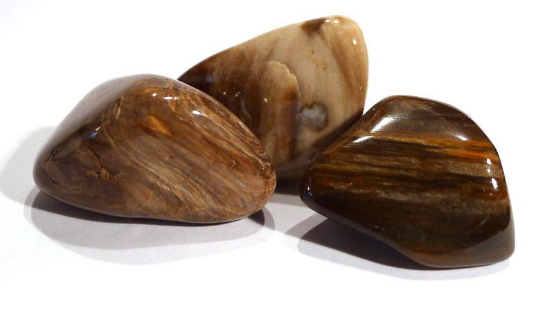 Fossilised Wood Tumble Stone 1