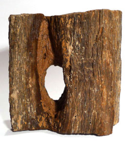 Fossilised Wood